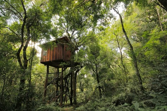 Hoteles construidos sobre rboles selva adentroselva adentro - Casas en los arboles girona ...